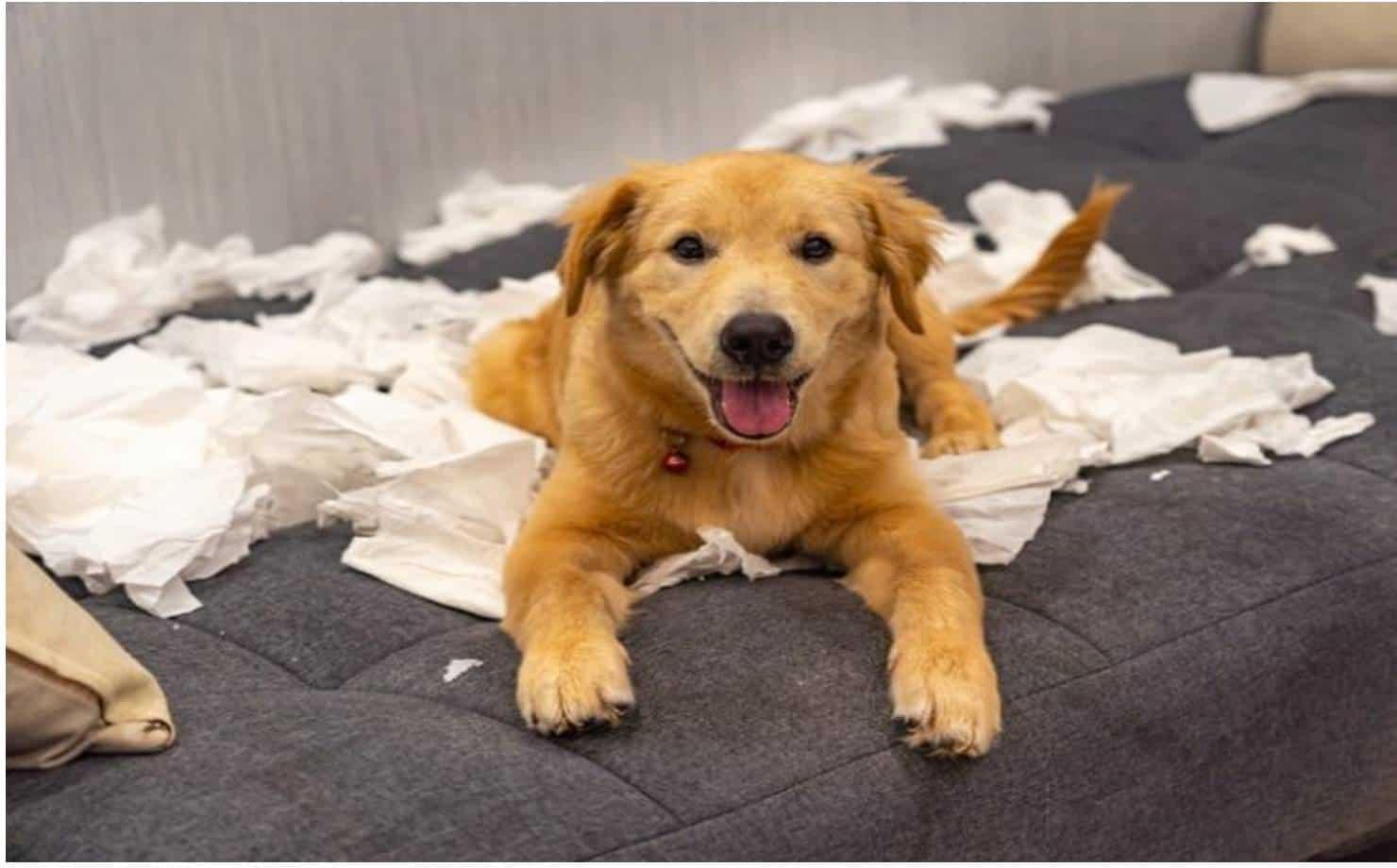 Mistura caseira para tirar o cheiro de cachorro da casa