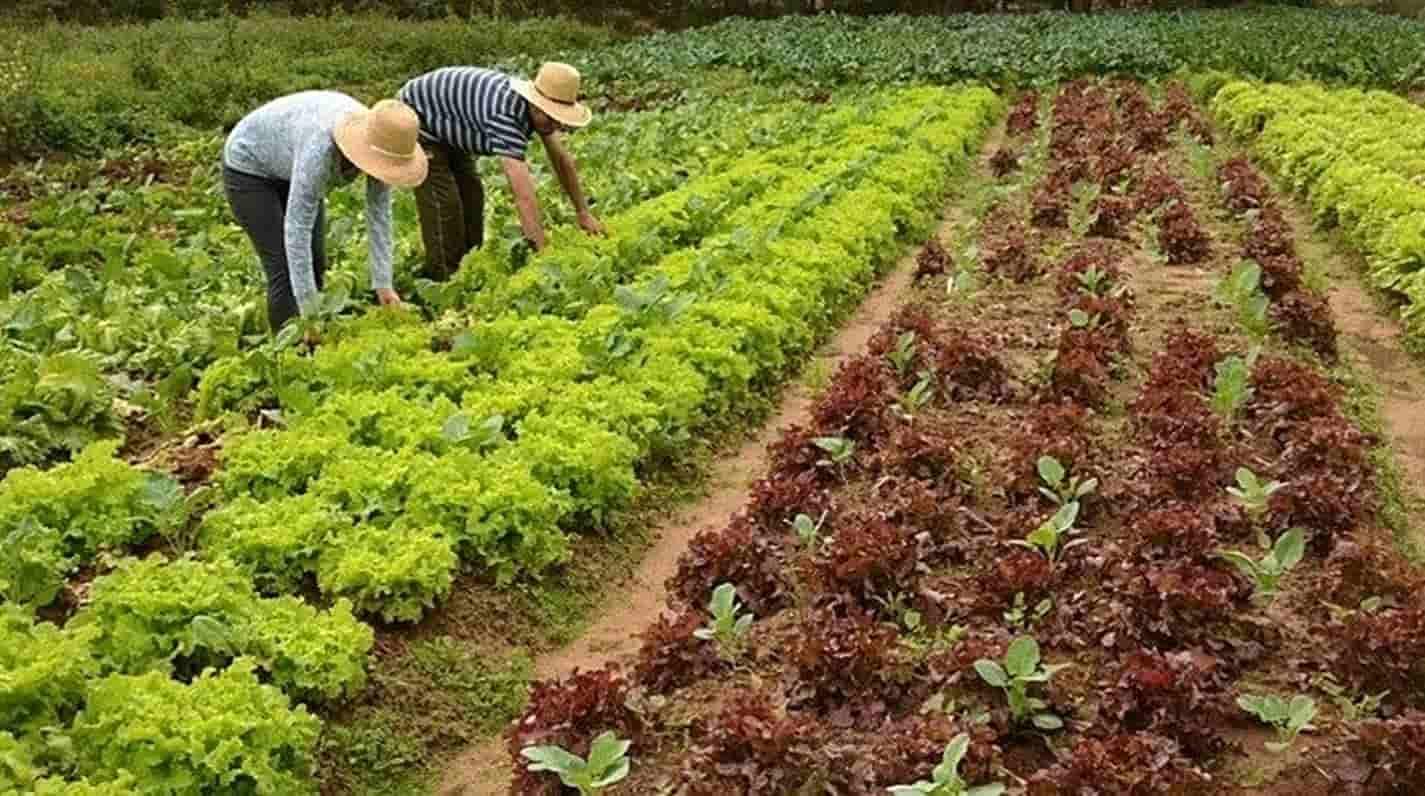 Deputados aprovam projeto de Lei que prevê auxílio a agricultores familiares
