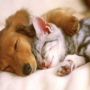 Cachorro e gato dormindo