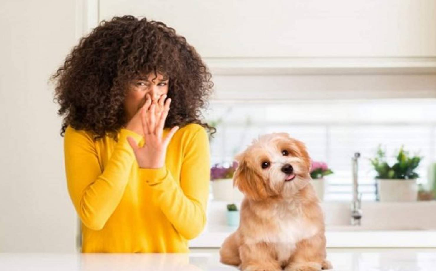 Elimine o cheiro de cachorro em casa com esses truques caseiros