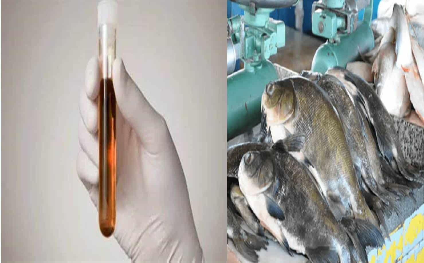 Urina Preta e Peixes