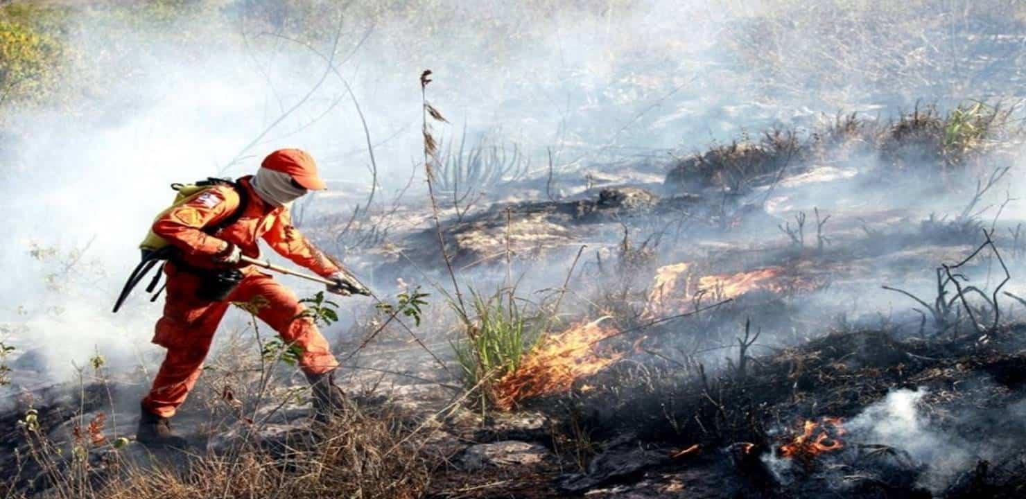 Bombeiro Combatendo Incêndio Florestais