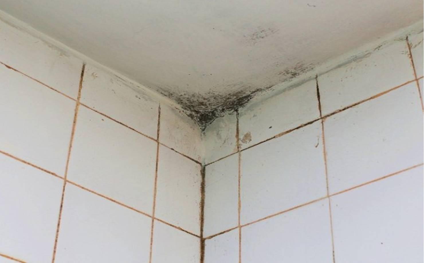 Detergente caseiro para remover o mofo no banheiro